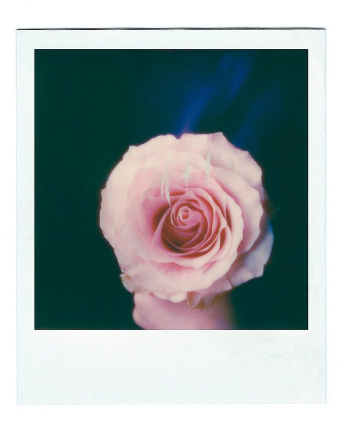Rose intérieure 1